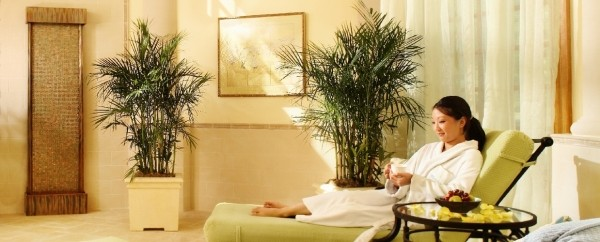 Flowering Almond Spa at The Founders Inn waiting